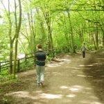 Scheme residents walk together on a sunlit woodland path